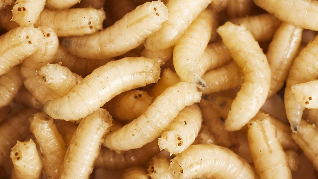 Entfernen lebensmittelmotten maden Lebensmittelmotten und