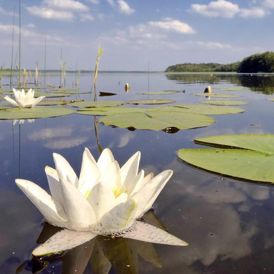 Naturpark Nossentiner/Schwinzer Heide   NDR.de   Ratgeber   Reise ...
