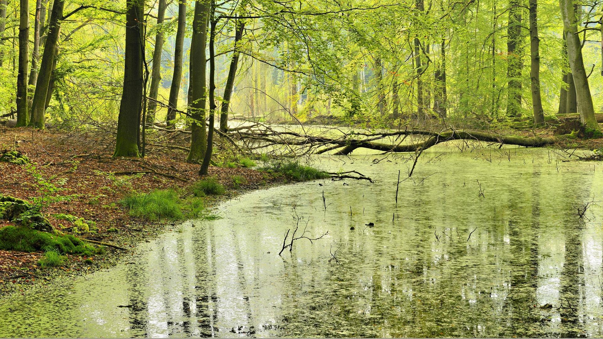 Müritz Nationalpark Natur pur erleben   NDR.de   Ratgeber   Reise ...