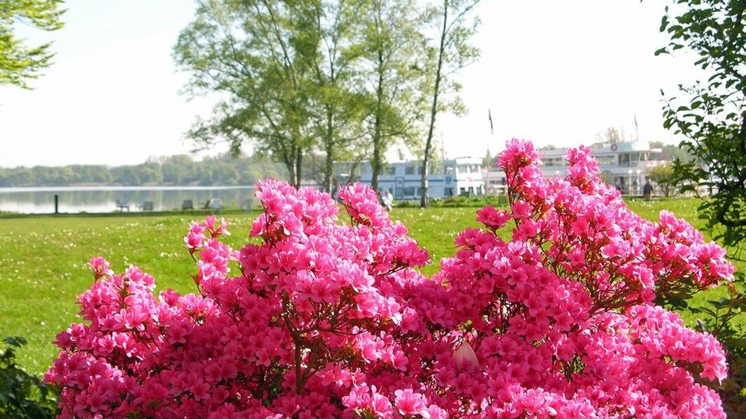radtour rhododendron route im ammerland ratgeber reise radtouren. Black Bedroom Furniture Sets. Home Design Ideas