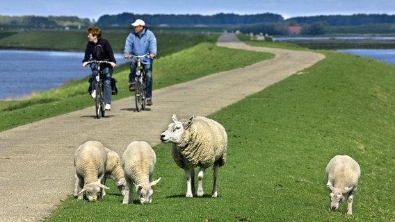 Fahrradwege Ostfriesland Karte.Auf Dem Nordseeküsten Radweg Durch Niedersachsen Ndr De Ratgeber
