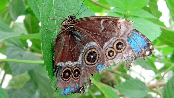 Schmetterlingsgarten sachsenwald