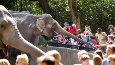 Elefanten füttern in Hagenbeck's Tierpark.  Foto: Uwe Wilkens