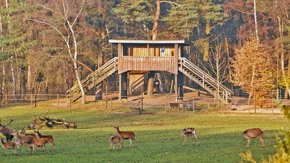 Wildpark Lüneburger Heide Karte.Zu Besuch Im Wildpark Lüneburger Heide Ndr De Ratgeber Reise
