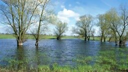 Überschwemmtes Land © picture-alliance / OKAPIA KG, Germany