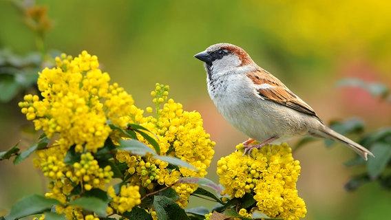 Hilfe zum Naturschutz: Gartenvögel zählen