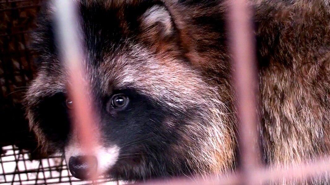 So leben und sterben Pelztiere | Ratgeber Verbraucher