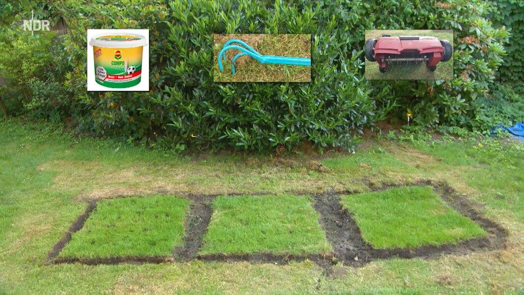 Was Hilft Gegen Moos Im Garten