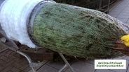 so viel gift steckt im weihnachtsbaum ratgeber. Black Bedroom Furniture Sets. Home Design Ideas
