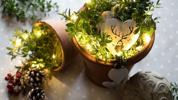 Ideen Für Weihnachtsdeko Mit Lichterketten Ndrde
