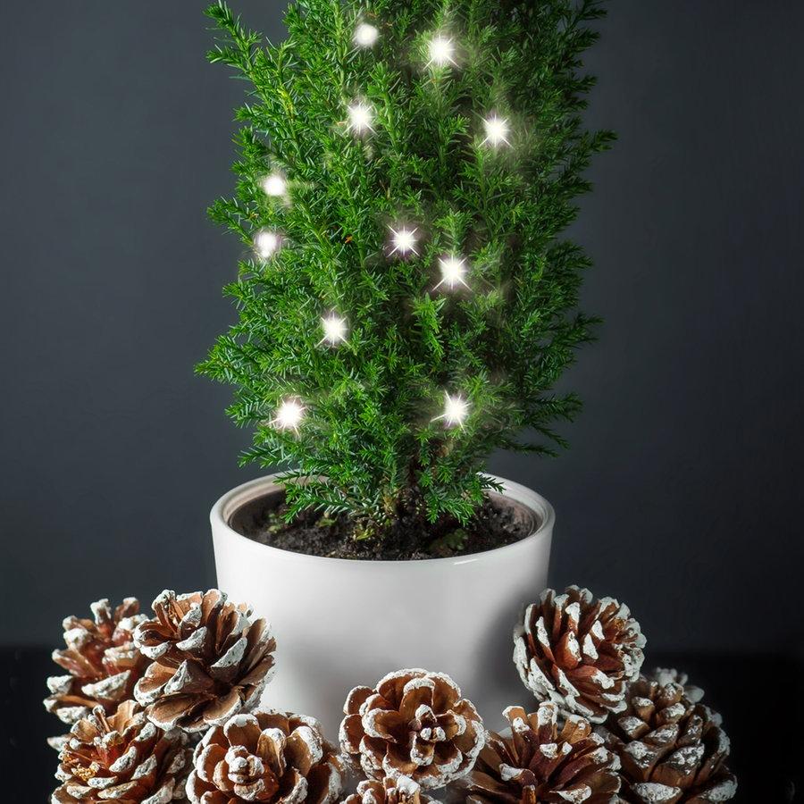 Miniatur Konifere 3,6x15cm Adventszeit Weihnachtsbeleuchtung Tannebaum