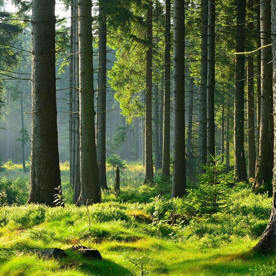 Natur erleben im Segeberger Forst   NDR.de   Ratgeber   Reise ...