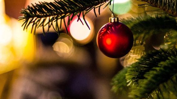 Der Weihnachtsbaum.So Bleibt Der Weihnachtsbaum Lange Frisch Ndr De Ratgeber Garten