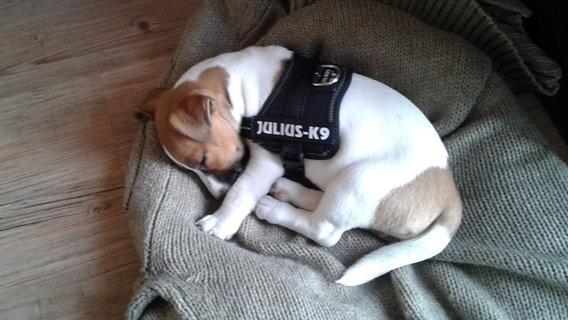 Ein Hund liegt schlafend auf einer Decke.  Foto: Melanie Siee