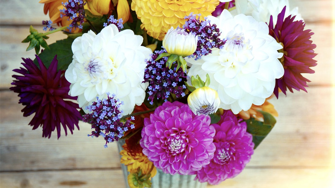 schnittblumen im winter kaufen ratgeber garten zimmerpflanzen. Black Bedroom Furniture Sets. Home Design Ideas