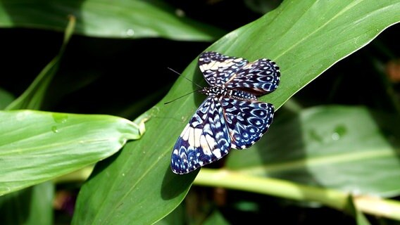 Diese Pflanzen Locken Schmetterling Biene Co Ndr De Ratgeber